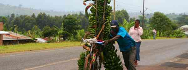 Banana bike (Charlie Walker)