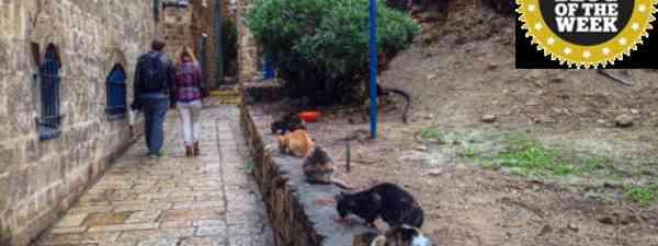 Tel Aviv cats (Rebecca Enright)