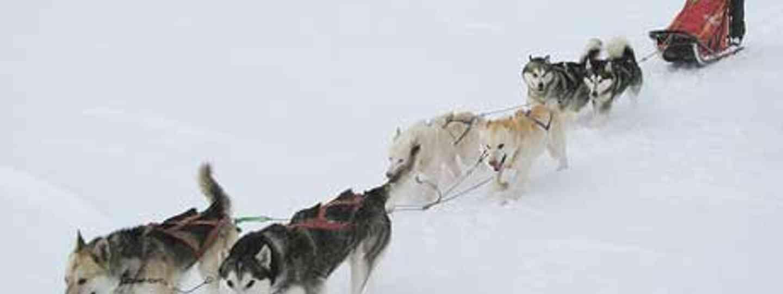 A wild yet cold journey dog sledding through Arctic Sweden (m.prinke)