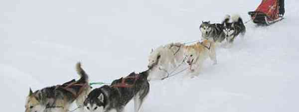 A wild yet cold journey dog sledding through Arctic Sweden (m.prinke)