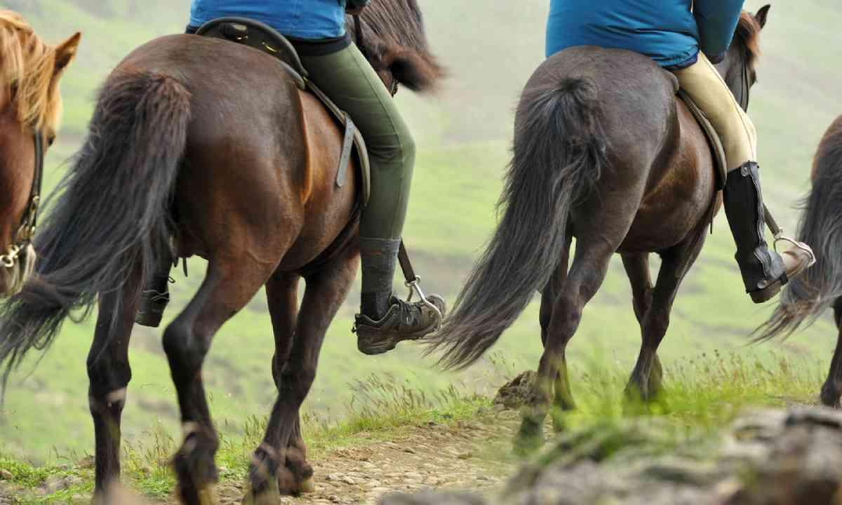 Horses in Iceland (Shutterstock)