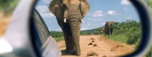 Elephant in the sir mirror (Wanderlust)