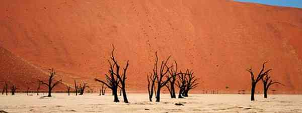 Namib Desert Deadvlei (Santiago Medem)