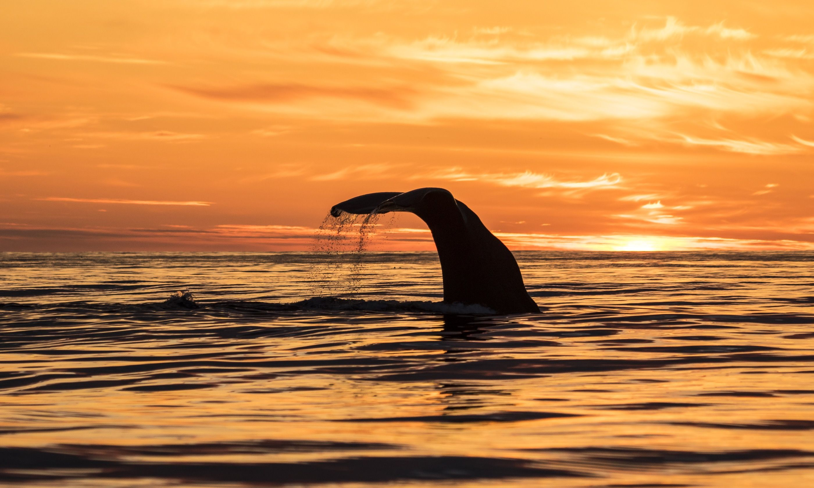 Sperm whale near Andenes on a midsummer night (Dreamstime)