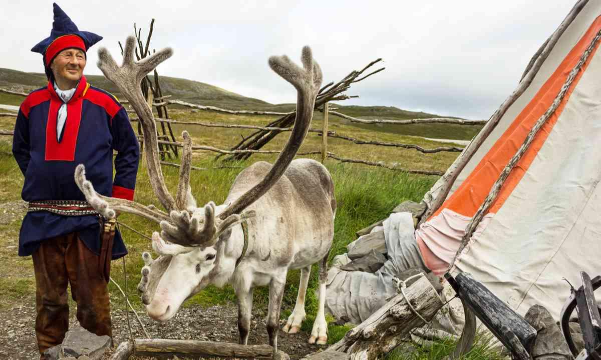 Sami reindeer breeder (Dreamstime)