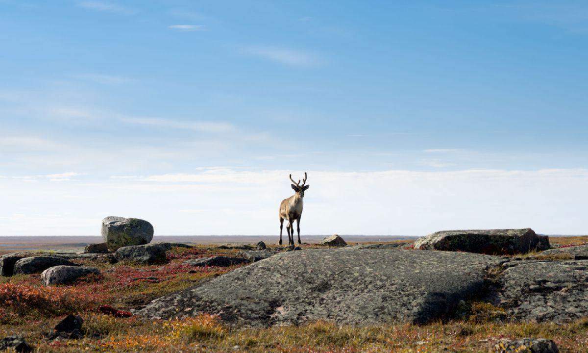 An Inuit Adventure Cruise In Arctic Canada Wanderlust Flipper Owl Hearty Orange
