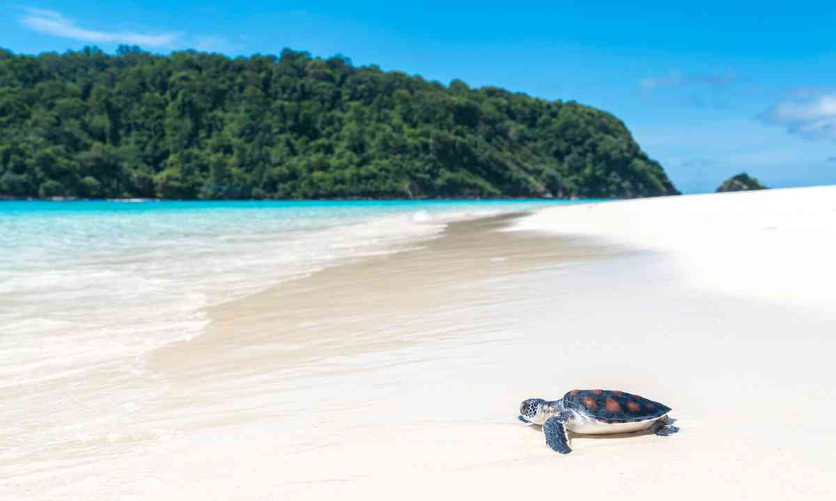 Turtle on the beach in Thailand (Dreamstime)