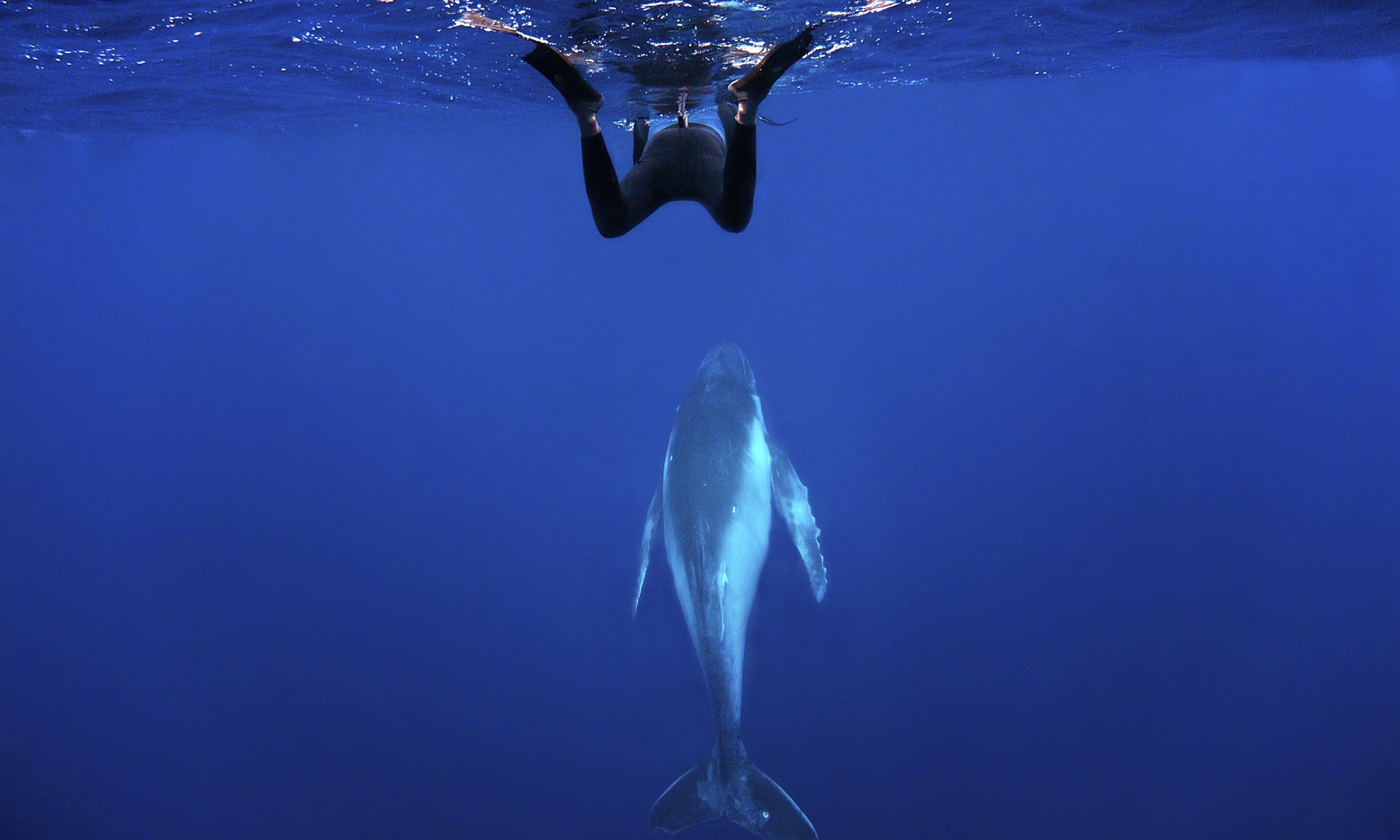 Diving with humpbacks in Tonga (Dreamstime)