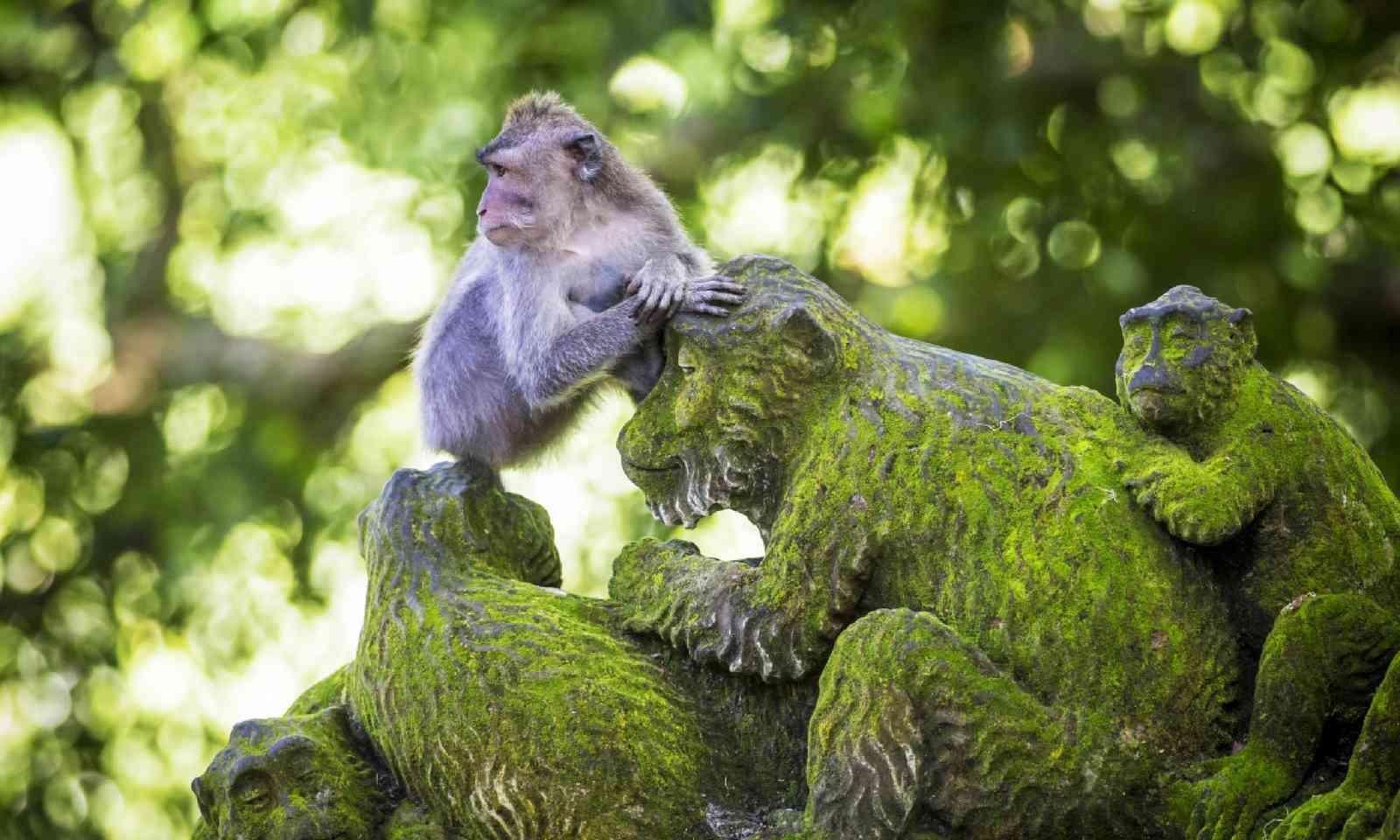 Sacred Monkey Forest, Ubud (Shutterstock)