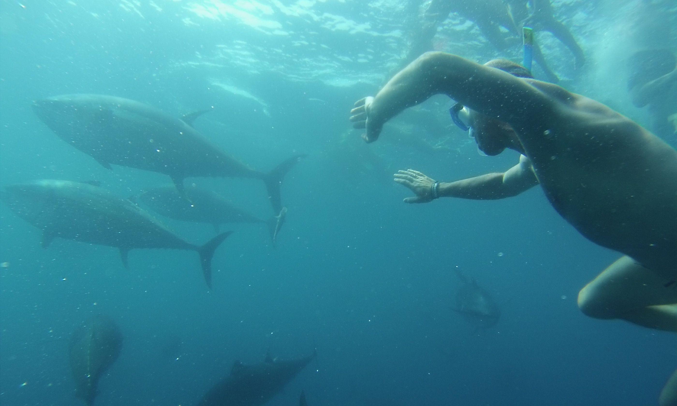 Swimming with the fishes in Catalonia (tunatour.com)