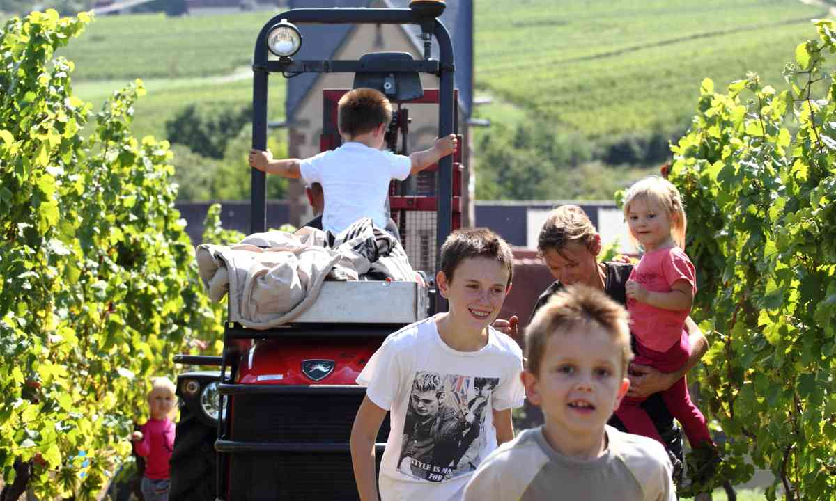 Kids helping with harvest (Dreamstime)