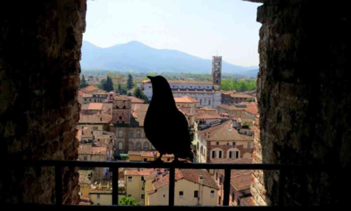 Bird's Eye View of Lucca