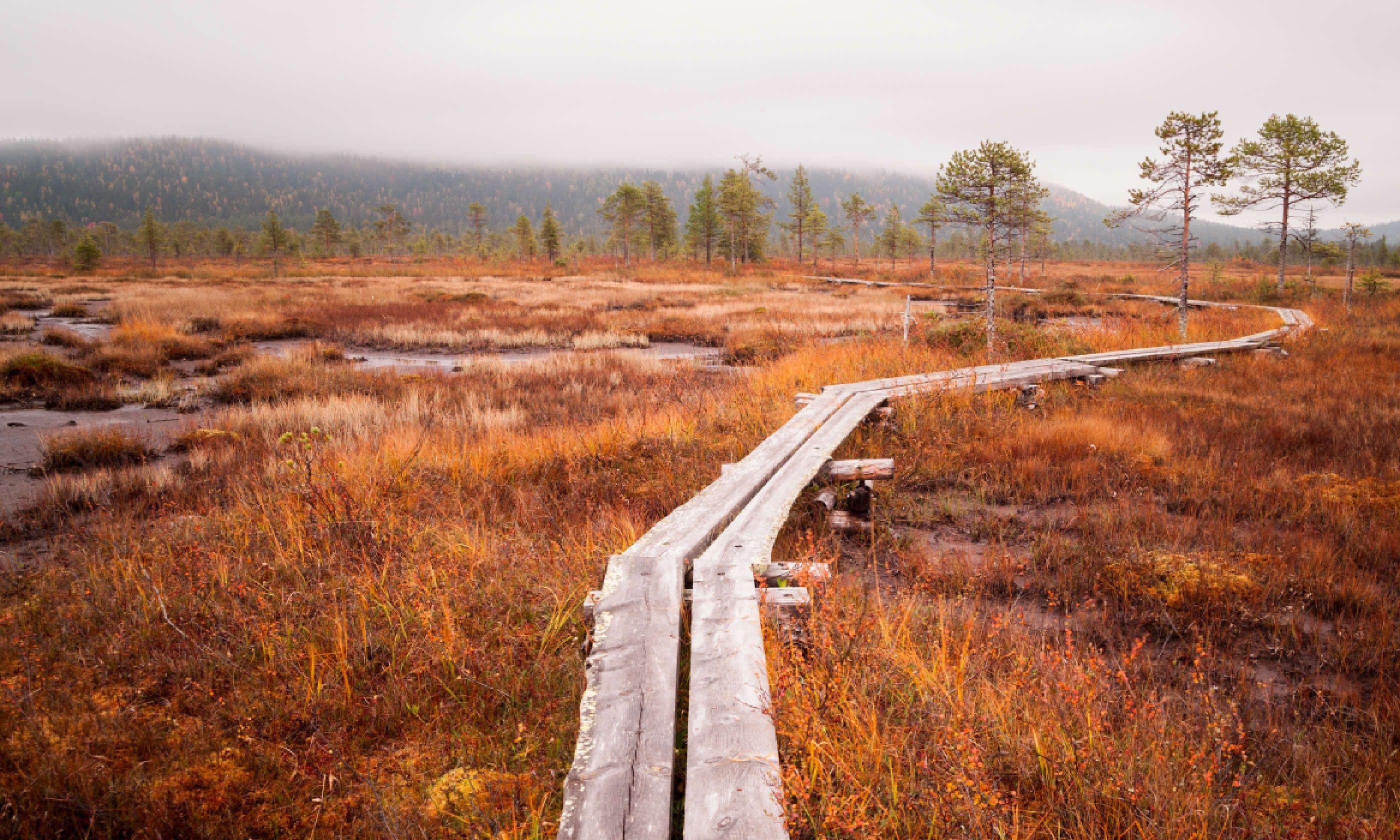 Bog in Finland (Shutterstock)