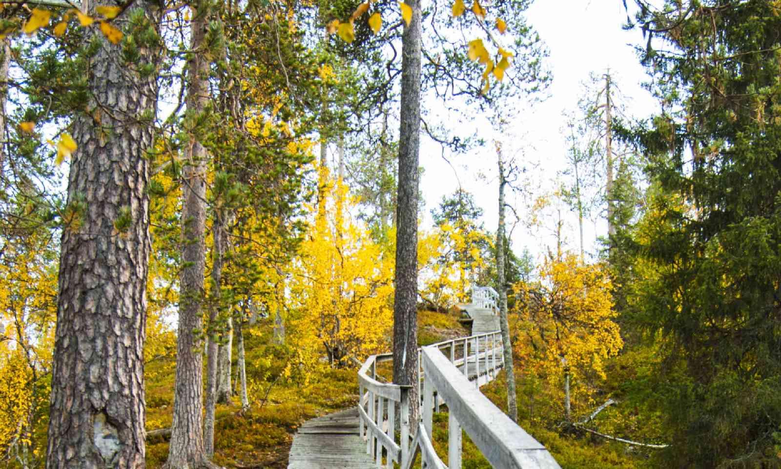Finland forest (Shutterstock)