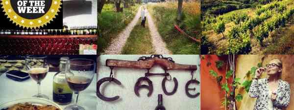 Nice vineyard montage (Chrissie McClatchie)