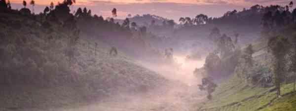 A Rwandan tea plantation near Nyungwe National Park (Dale Morris)