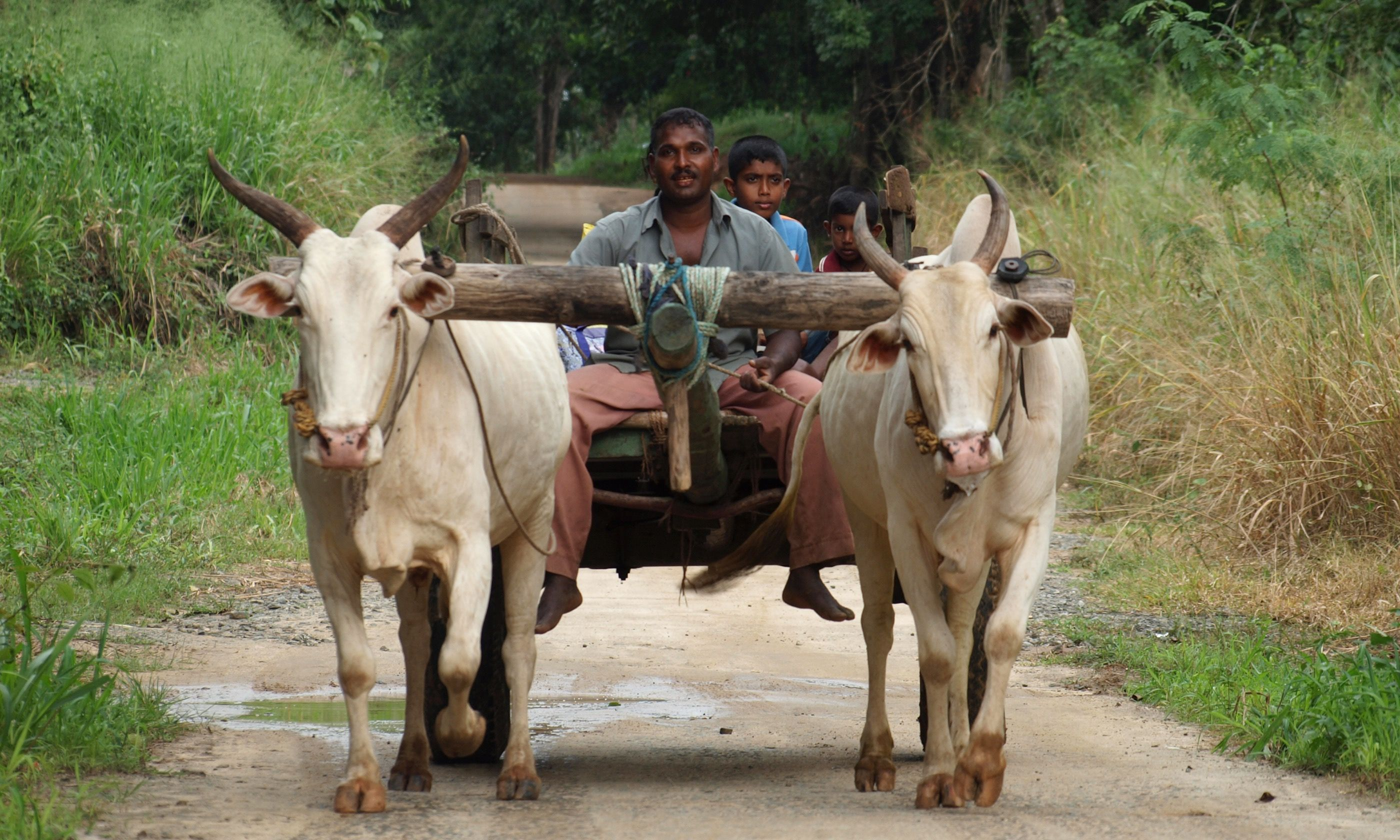Life in the back roads of Sri Lanka (Dreamstime)