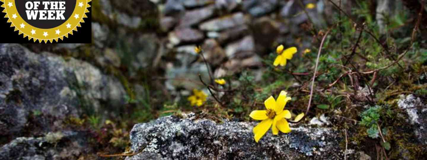 Flowers on the Inca Trail (Greg Goodman)