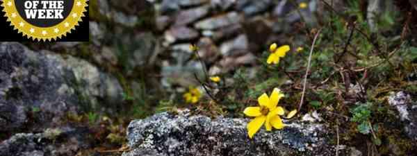 Flowers on the Inca Trail (Greg Goodman)