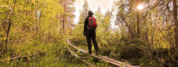 Walking through the forest in Sweden (Dreamstime)