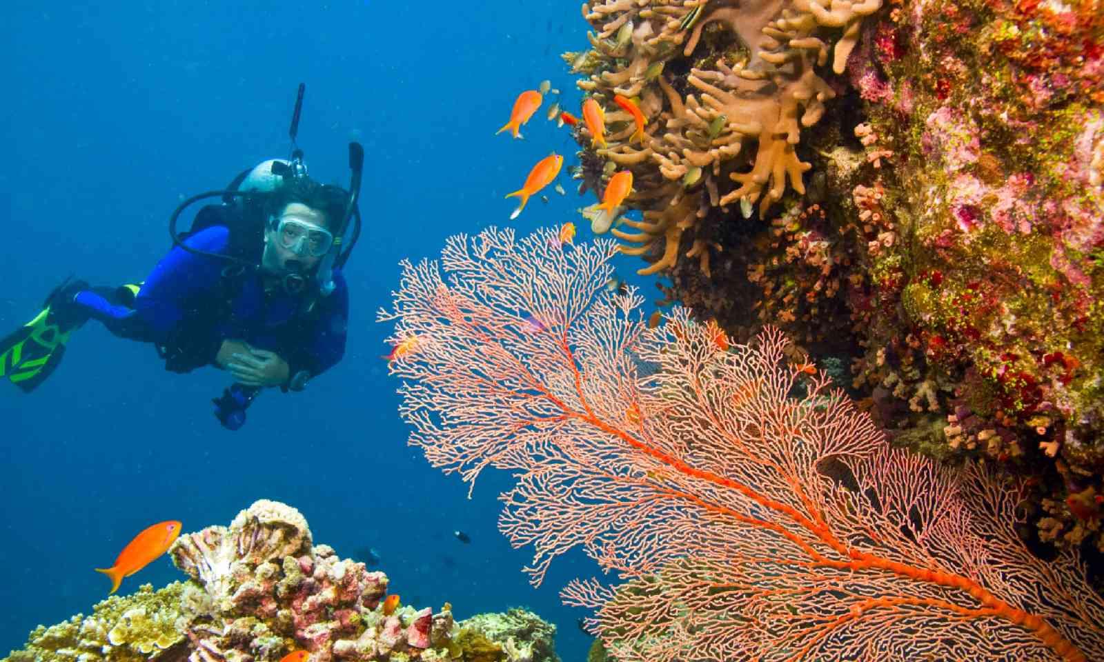 Scuba diving on the Great Barrier Reef (Shutterstock)
