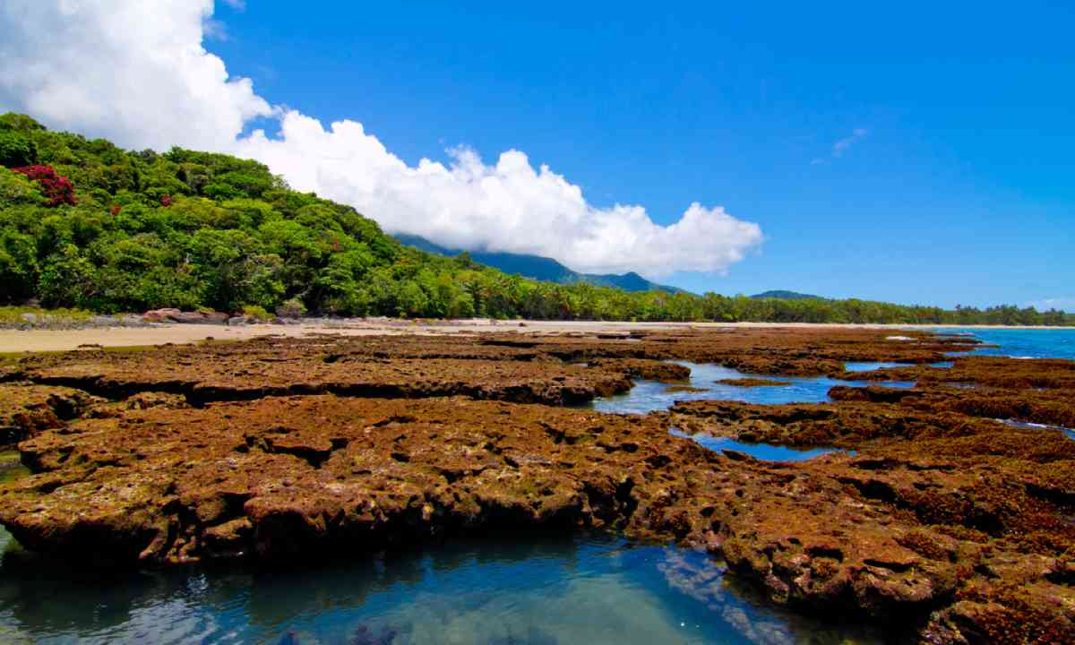 Daintree National Park (Shutterstock)