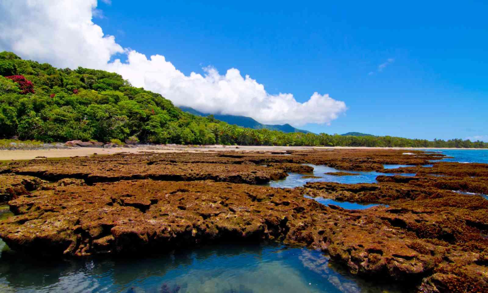 Daintree National Park (Shutterstock)