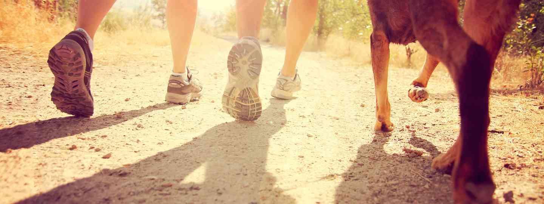 Dogwalking in the sun (Shutterstock: see credit below)