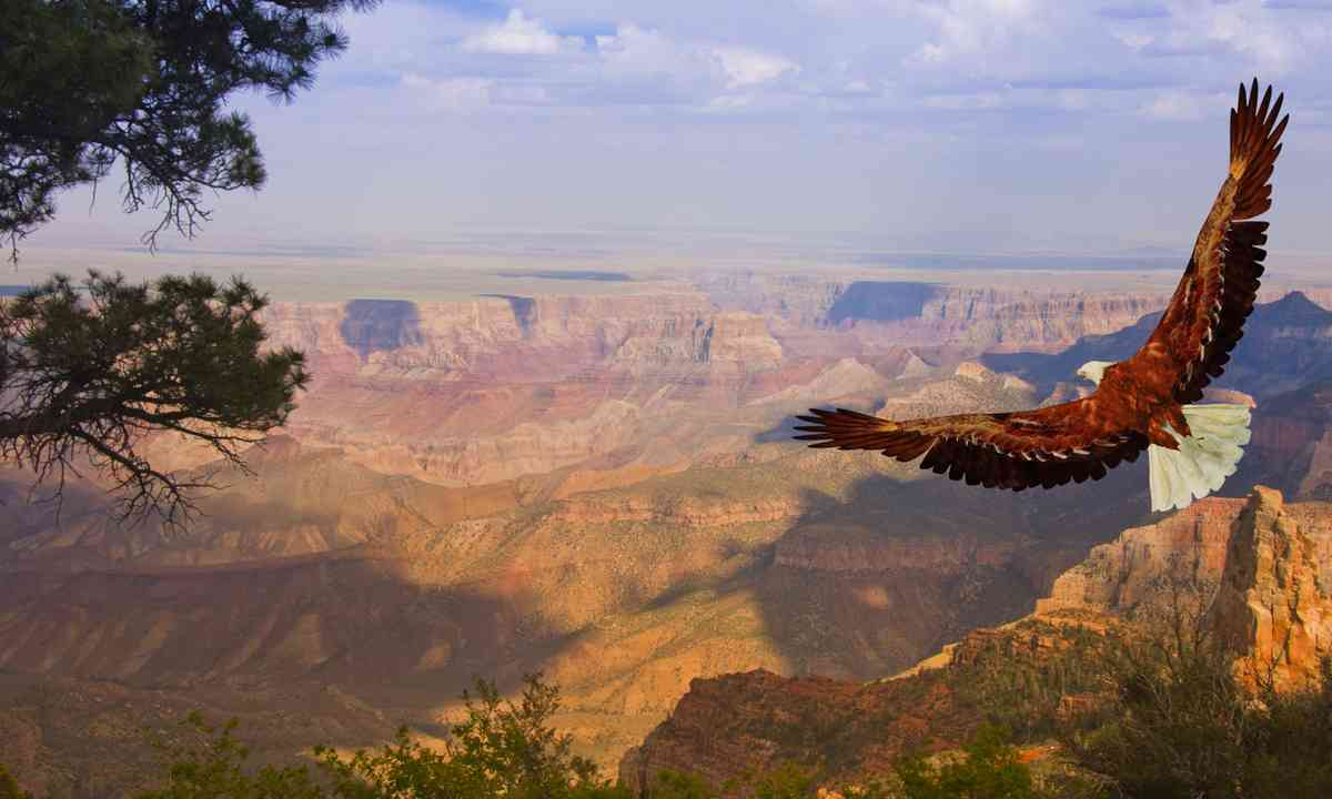 Eagle taking flight over the Grand Canyon (Dreamstime)