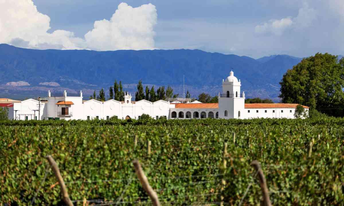 Vineyards, Mendoza, Argentina (Shutterstock)
