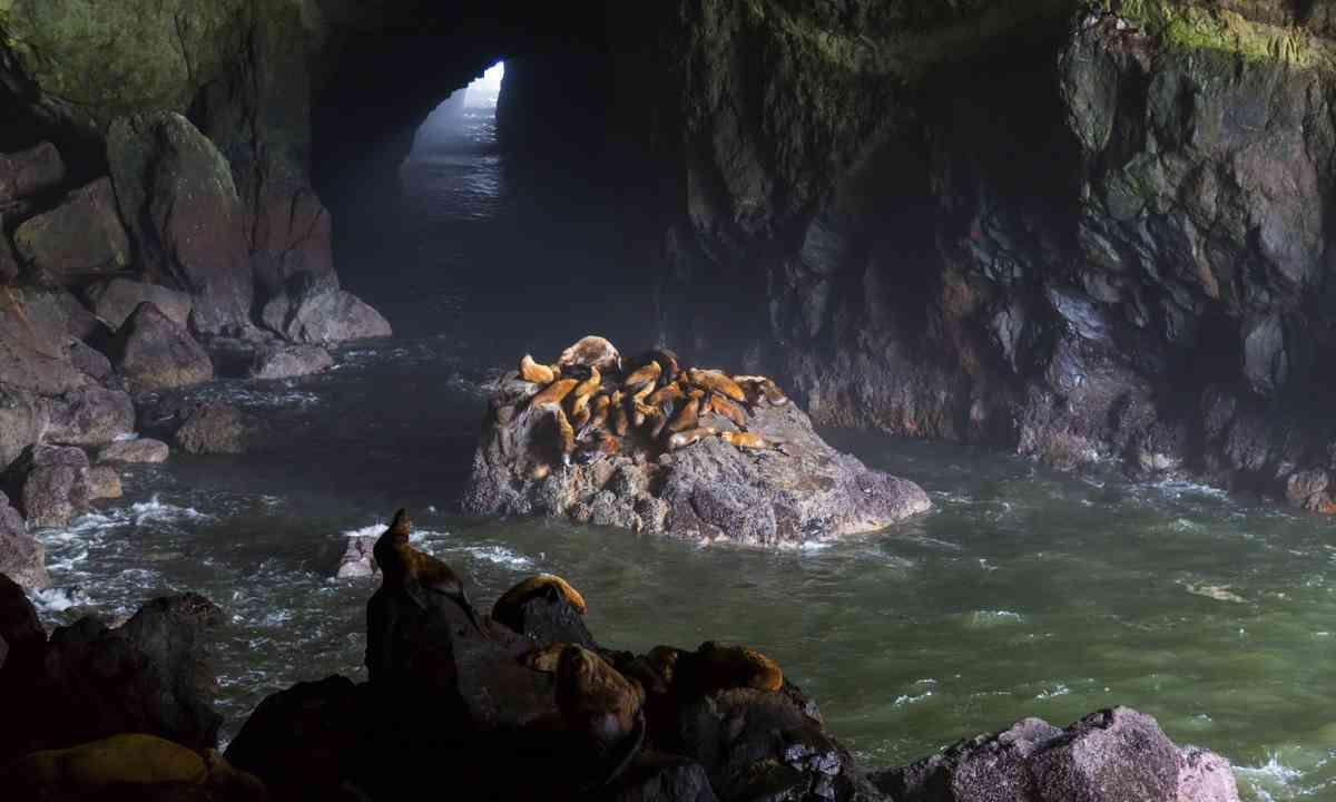 Sea Lion Cave on Oregon Coast (Dreamstime)
