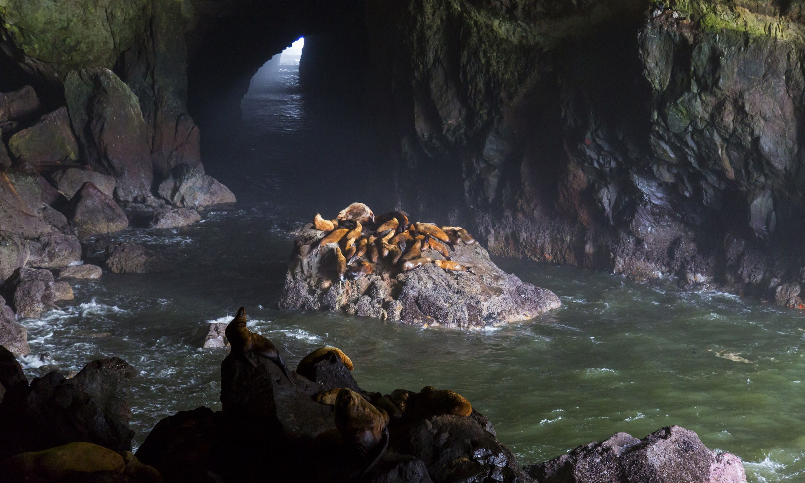 Sea Lion Cave on Oregon Coast (Dreamstime)