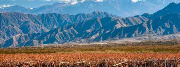 Volcano Aconcagua and Vineyard, Mendoza (Shutterstock: see credit below)