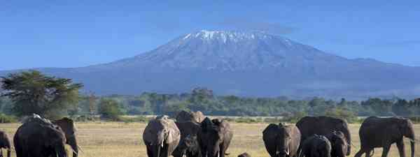 Elephants in Kilimanjaro National Park (Shutterstock: see credit below)