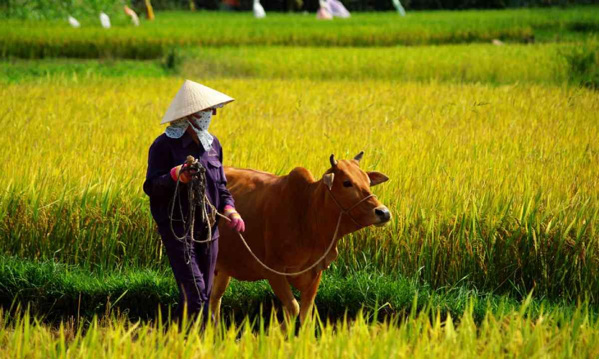 Farmer in Hoi An (Shutterstock)
