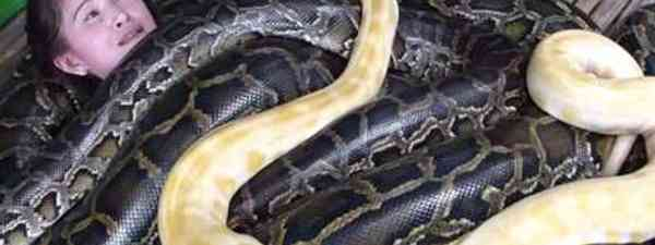 Python spa treatment (Cebu Zoo)