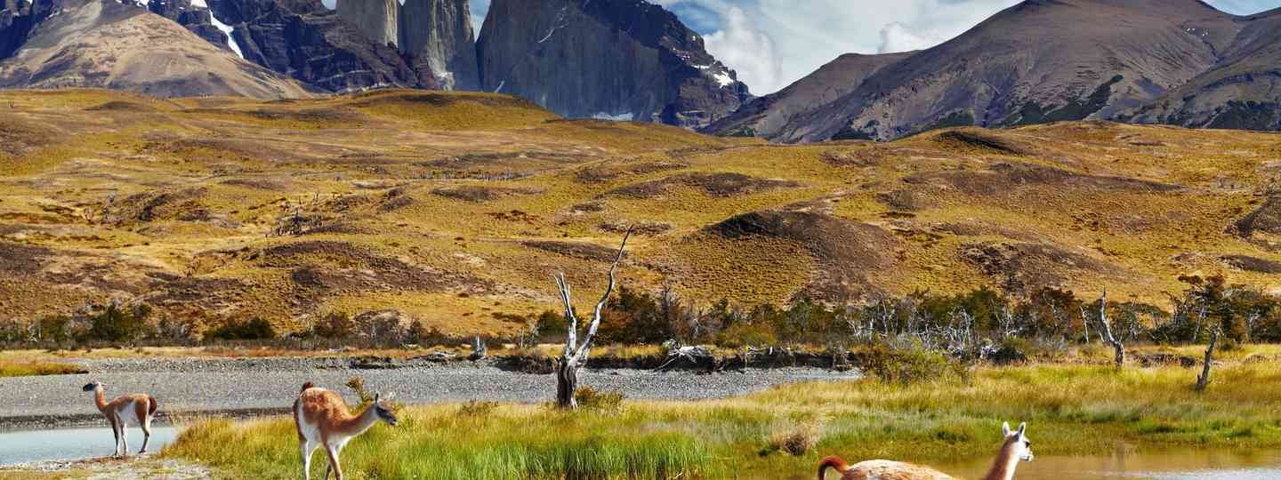 Torres del Paine National Park, Patagonia, Chile (Shutterstock.com. See main credit below)