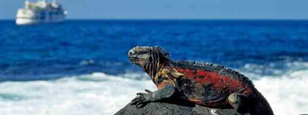 Marin Iguana (Shutterstock: see main credit below)