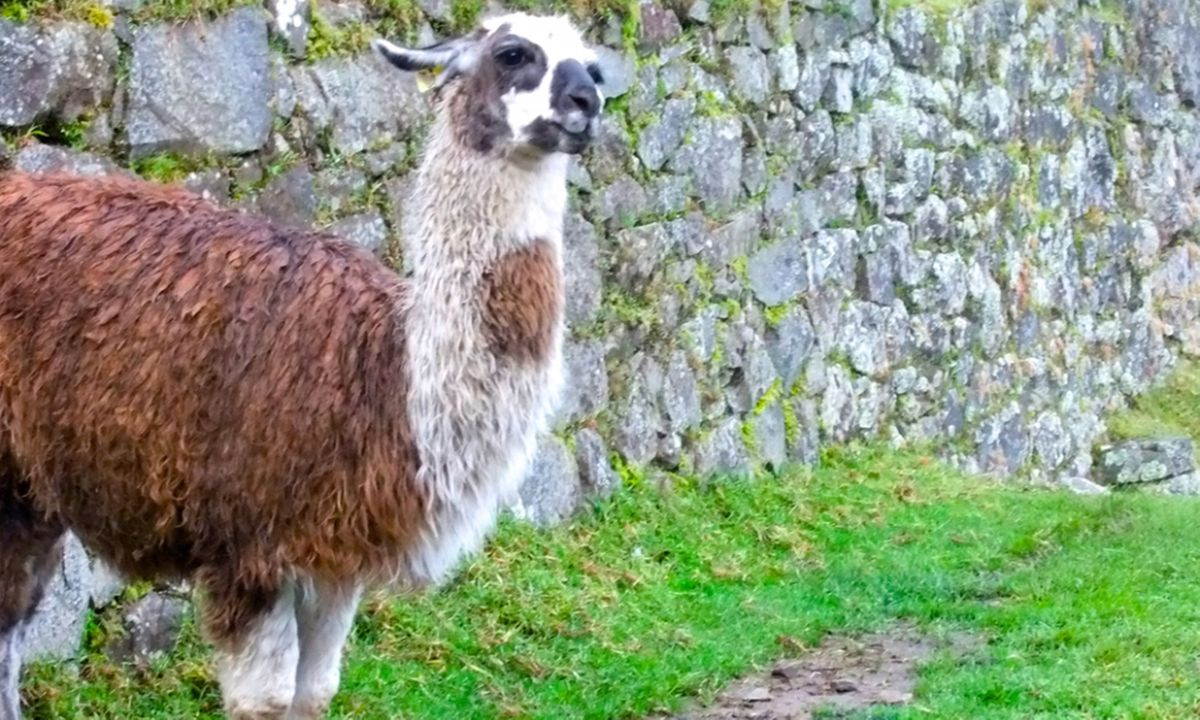 10 top tips for conquering the Inca Trail to Machu Picchu