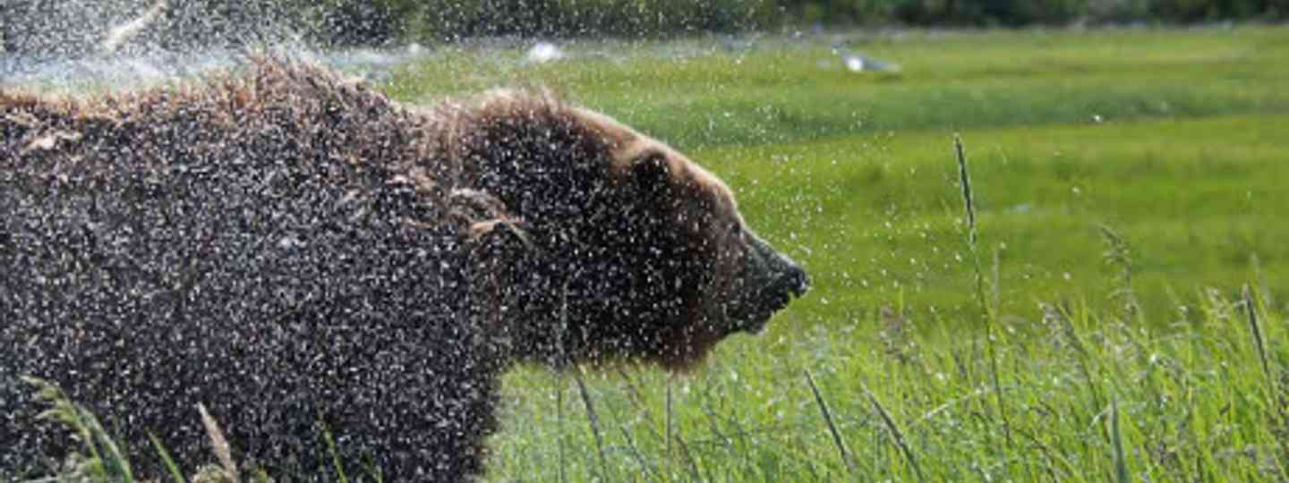 """This bear was so close we got wet."" (Image: Simon Chubb)"