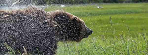 """This bear was so close we got wet."" (Image: Simon Chubb)"