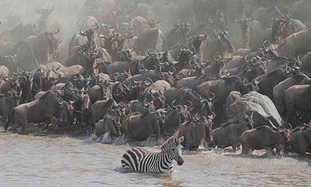The Great Migration (Paul Goldstien)