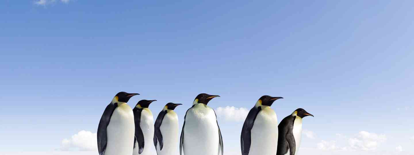 Penguins in Antarctica (Dreamstime)