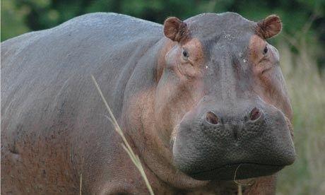 Hungry Hippo (Lyn Hughes)