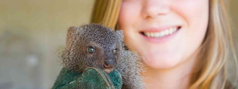 Wildlife volunteer (Shutterstock.com. See main credit below)