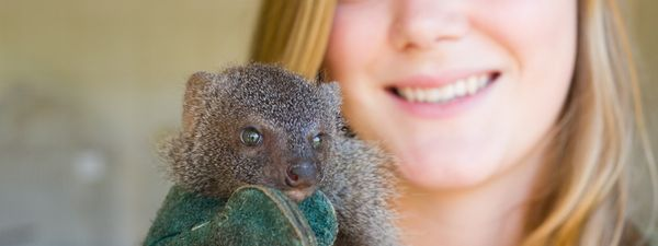 5 wildlife volunteering experiences where you can really