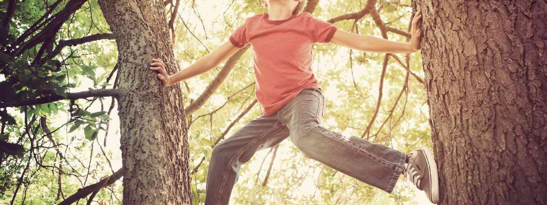 Boy climbing tree (Shutterstock.com. See main image below)