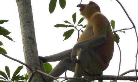 Monkey (Marie Javins)