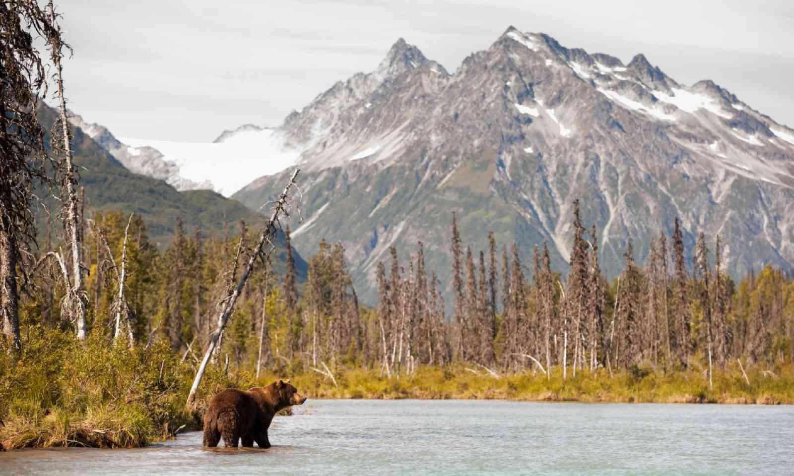 Brown bear, Alaska (Shutterstock)