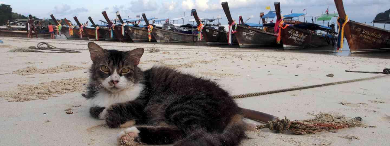 Cat on a Thai beach (Jamie Furlong)